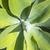 aloés · folhas · creme · natureza · corpo · folha - foto stock © meinzahn
