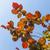 sekély · fókusz · fényes · piros · levelek · kék · ég - stock fotó © meinzahn