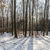 lovely frozen path winter countryside snow forest lovely wood stock photo © meinzahn