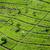 tea · ültetvény · felvidék · Malajzia · természet · fa - stock fotó © meinzahn