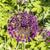 tok · çiçek · çiçekler · bahçe · güzellik · top - stok fotoğraf © meinzahn