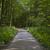 bos · parcours · zonnestralen · groene · voorjaar · boom - stockfoto © meinzahn