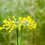 mucca · campo · primo · piano · erba · natura · ritratto - foto d'archivio © meinzahn