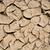 завода · сушат · треснувший · грязи · лист · пустыне - Сток-фото © meinzahn