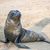 seal at cape cross namibia stock photo © meinzahn