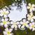 水 · 白 · スイミングプール · 花 · 背景 - ストックフォト © meinzahn