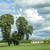 mezők · fák · Németország · égbolt · étel · tájkép - stock fotó © meinzahn