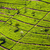 chá · verde · campos · luxuriante · Monte · Fuji · paisagem · neve - foto stock © meinzahn