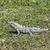 verde · lagarto · tropical · macro · naturalismo · Malásia - foto stock © meinzahn
