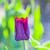 printemps · sensation · mains · âgées · homme · bébé - photo stock © meinzahn
