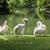 白 · 楽しむ · 太陽 · 東部 · バラ色の · 鳥 - ストックフォト © meinzahn