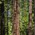 ヨセミテ · 草原 · ヨセミテ国立公園 · 米国 · 空 · 草 - ストックフォト © meinzahn
