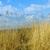 azul · lago · verano · cielo · azul · cielo · forestales - foto stock © meinzahn
