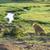 aslan · park · Afrika · Afrika · doğal · Kenya - stok fotoğraf © meinzahn
