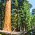 sequoia · alberi · foresta · alto · grande · bella - foto d'archivio © meinzahn