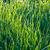 свежие · трава · капли · роса · зеленый · экология - Сток-фото © meinzahn