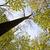 renkli · fantezi · manzara · 3D · su - stok fotoğraf © meinzahn