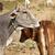 moeder · koe · jonge · veld · hemel - stockfoto © meinzahn
