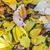 coroa · carvalho · indiano · verão · cores · céu - foto stock © meinzahn