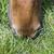 mouth of horse grazing green grass stock photo © meinzahn
