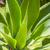 folhas · verde · agave · planta · céu · flor - foto stock © meinzahn