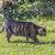 молодые · котенка · охота · зеленая · трава · трава · Открытый - Сток-фото © meinzahn