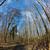 huş · ağacı · ahşap · arka · plan · çerçeve - stok fotoğraf © meinzahn