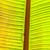лягушка · завода · дерево · природы · зеленый · животного - Сток-фото © meinzahn