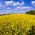 黄色 · フィールド · 春 · 美しい · 水 - ストックフォト © meinzahn