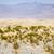 Szahara · homok · naplemente · hegy · kék · napfelkelte - stock fotó © meinzahn