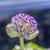 közelkép · tele · virágzik · virág · földgömb · természet - stock fotó © meinzahn