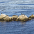 sea lions cormorants and other birds relax at a rock in the oce stock photo © meinzahn