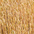 tarwe · hoofd · detail · uit · focus · textuur - stockfoto © meinzahn