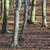 huş · ağacı · orman · sabah · güneş · bahar · yol - stok fotoğraf © meinzahn