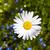 美しい · 草 · 庭園 · 詳細 · 花 · 春 - ストックフォト © meinzahn