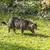kot · polowanie · ogród · twarz · trawy · oczy - zdjęcia stock © meinzahn