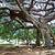 botanical garden of peradeniya kandy stock photo © meinzahn