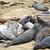 male Seelion at the beach stock photo © meinzahn