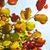 美しい · 葉 · 樺 · 赤 · 色 · 春 - ストックフォト © meinzahn