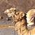 арабский · Верблюды · израильский - Сток-фото © meinzahn