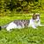 cute · kat · leven · buitenshuis · tuin · gras - stockfoto © meinzahn