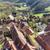 eski · çatı · fayans · şehir · kırmızı · mimari - stok fotoğraf © meinzahn