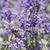 abelha · voador · flores · exótico · belo · flor - foto stock © meinzahn