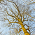 crown of trees stock photo © meinzahn