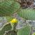 detail of scenic cactus plants stock photo © meinzahn