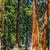 grande · sequoia · alberi · parco · gigante · frazione - foto d'archivio © meinzahn