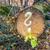 ツリー · 森林 · 描いた · 疑問符 · 木材 · 建設 - ストックフォト © meinzahn