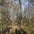 parlak · kış · manzara · ağaçlar · orman · gündoğumu - stok fotoğraf © meinzahn