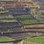 сельский · природы · саду · зеленый · фермы · черный - Сток-фото © meinzahn