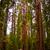 sequoila · park · snelweg · drie · rivieren · Californië - stockfoto © meinzahn